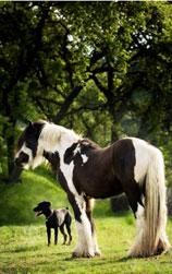 doghorse1