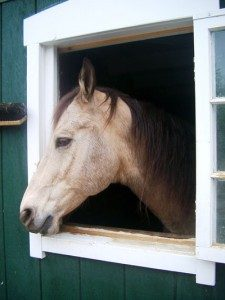 horse_barn1-225x300