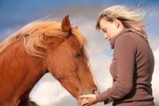 horsepet